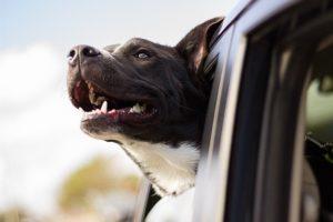 ביטול הגבלה על רישיון נהיגה